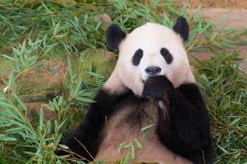 パンダのもり|上野動物園2020の混雑状況と所要時間は?