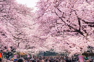 上野公園【桜まつり】2021の開花状況は?見頃やライトアップ|中止